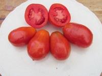Hungarian Paste tomatoes