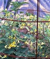 orderflowers.jpg