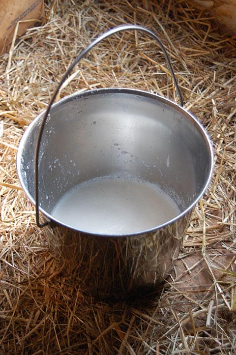 thanks-prissy-for-the-milk.jpg