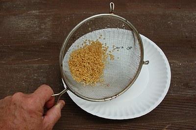 cleaning-seeds.jpg