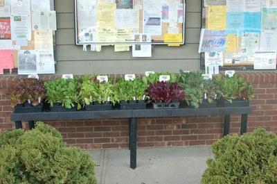 early-spring-bedding-plants.jpg