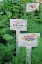 greenhouse-crop-w-Tstakes.jpg