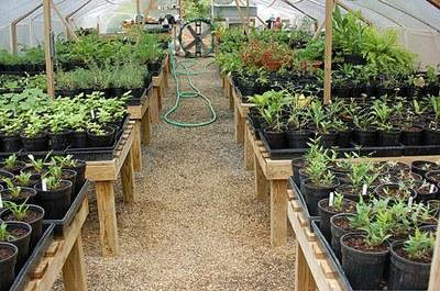 inside-greenhouse.jpg