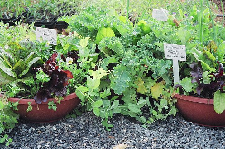 salad-bowls.jpg