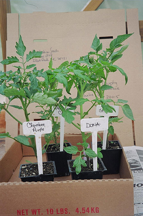 shipping-tomato-plants.jpg
