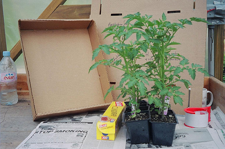 shipping-tomatoes.jpg