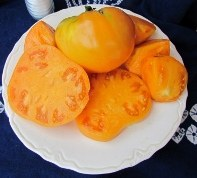 Barnes Mountain Orange