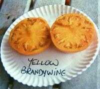 Yellow Brandywine