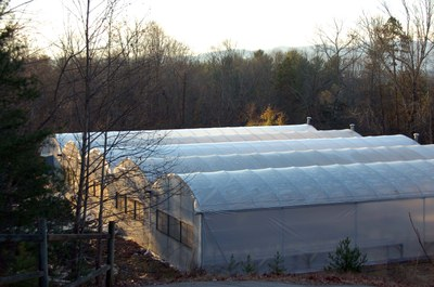 morganton greenhouses