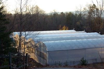 morganton greenhouses